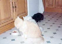 baldrian tropfen dosierung hund